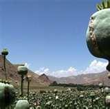 drug addiction: AFGHANISTAN: Drug addiction - a growing burden - IRIN Pictures