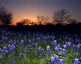 Drug Treatment Centers Texas Pictures